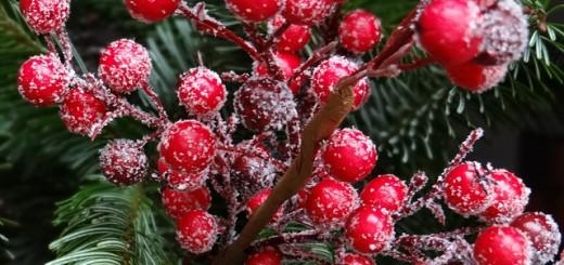 red-christmas-berries-67154_640